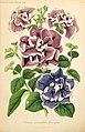Illustrierte Garten-Zeitung (Taf. 12) (6056409130).jpg