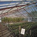 Interieur rozenkas - Aalsmeer - 20404558 - RCE.jpg