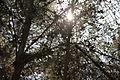 Israel Ben Shemen Forest (8115571189).jpg