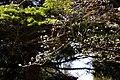 James Gardens (6583460261).jpg
