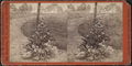 John Hoey's Garden, Long Branch, from Robert N. Dennis collection of stereoscopic views 2.png