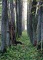 Joosu Waimel-Neuhof manor park 01.jpg