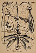 Journal of the Royal Horticultural Society of London (1873) (14577466119).jpg