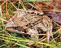 Jyväskylä - frog.jpg