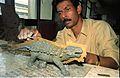 Kalyan Shankar Das Modelling Ankylosaurus - Dinosaurs Alive Exhibition - NCSM - Calcutta 1995 129.JPG