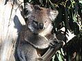 Kangaroo Island (2052422944).jpg