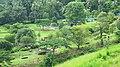 Kanjirapuzha Gardens - panoramio (5).jpg