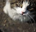 Katt på Vålerenga.jpg