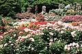 Keisei Rose Garden1.jpg