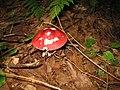 Kellettsville, Kingsley TWP, Forest Co PA mushroom.jpg