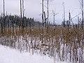 Kemeri - panoramio (8).jpg