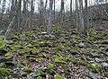 Ketkovice - suťové pole v údolí Chvojnice.jpg