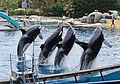 Killer whales in Marineland.jpg