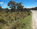 King William Saddle 20171121-020.jpg