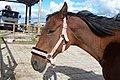 Koński smutek - panoramio.jpg
