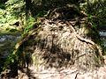 Kościeliska Valley-stone - panoramio.jpg