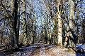 """Koki pie kādreiz bijušas mājas""""Vecsalas"""" - panoramio.jpg"""