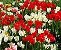 Kukkiahelsinkikesäsuomi572147514115557.jpg