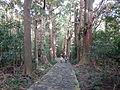 Kumano Kodo pilgrimage route Daimon-zaka World heritage 熊野古道 大門坂06.JPG