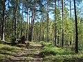 Līksna Parish, LV-5456, Latvia - panoramio - BirdsEyeLV (3).jpg