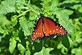 LD Butterfly (6).jpg