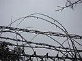 LODOWE OBRAZKI 03 - panoramio.jpg