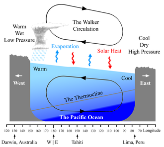 Walker circulation - A schematic diagram of the quasi-equilibrium and La Niña phase of the southern oscillation. The Walker circulation is seen at the surface as easterly trade winds which move water and air warmed by the sun towards the west. The western side of the equatorial Pacific is characterized by warm, wet low pressure weather as the collected moisture is dumped in the form of typhoons and thunderstorms. The ocean is some 60 cm higher in the western Pacific as the result of this motion. The water and air are returned to the east. Both are now much cooler, and the air is much drier. An El Niño episode is characterised by a breakdown of this water and air cycle, resulting in relatively warm water and moist air in the eastern Pacific.