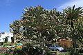La Palma - Los Llanos de Aridane - Las Manchas - Plaza de Glorieta - Opuntia 03 ies.jpg