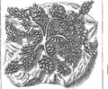 La generation de l'homme, ou tableau de l'amour conjugal, considéré dans l'état du mariage, par M Fleuron N007814-15.png
