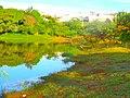 Lago no parque ecológico - panoramio.jpg