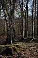 Lainzer Tiergarten März 2014 Wald am Schlossergassl 3.jpg