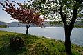 Lake Yogo02s3200.jpg