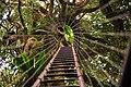 Lamington National Park, Queensland, Australia -treetops walk-17June2010.jpg