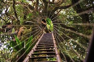Scenic Rim - The treetops walk at Lamington National Park