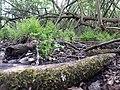 Landschaftsschutzgebiet 14974 Ludwigsfelde Pechpfuhl 04.jpg