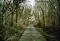 Lane between Woods - geograph.org.uk - 1238248.jpg