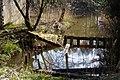 Leśny staw - panoramio (7).jpg