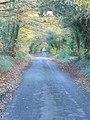 Leafy lane - geograph.org.uk - 280906.jpg