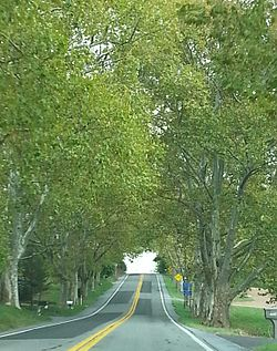 Legislative Route 1 Sycamore Allee