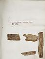 Lichenes Helvetici IX X 1833 029.jpg