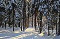 Lill-Jansskogen, vinter.jpg