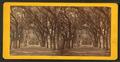 Live Oak Avenue, Bonaventure Cemetery, Savannah, Ga, from Robert N. Dennis collection of stereoscopic views 6.png