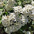 Local Garden Beauty (48134992882).jpg