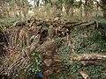 Log pile at Nether Hale Farm - geograph.org.uk - 631157.jpg