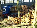 Logging Operation 2 - geograph.org.uk - 685620.jpg