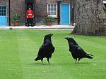שני עורבים בטאוור גרין שבמצודת לונדון