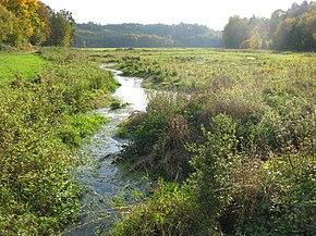 Photographie en couleurs d'une rivière aux rives recouvertes d'herbacées, une route bordée d'un massif forestier visibles au second plan.