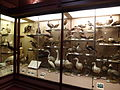 Los Angeles County Museum of Natural History - shore birds.JPG