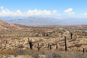 Los Cardones National Park 04.jpg