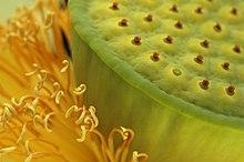 Lotus world.jpg